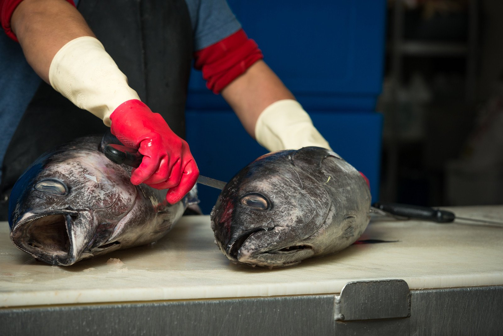 A man gutting two large fish