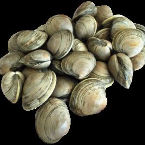 Whole clams