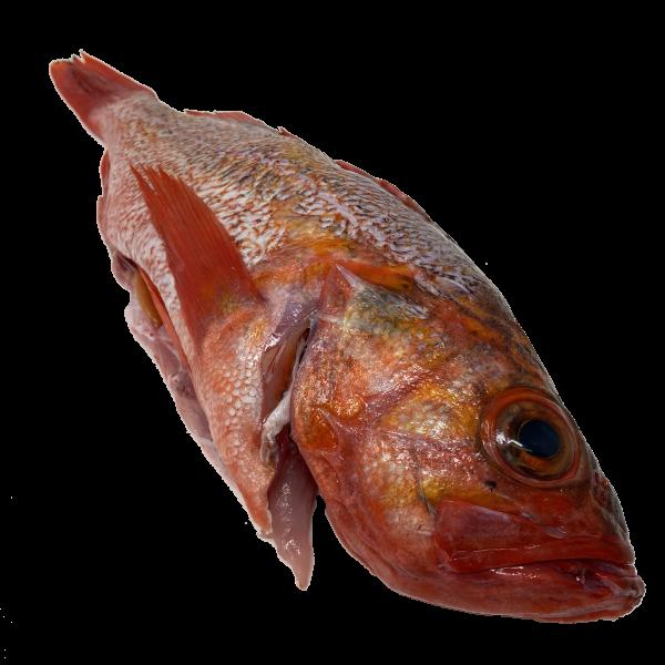 Fresh, whole rockfish
